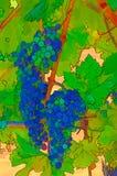 Weinberg-Trauben-Zusammenfassung Lizenzfreie Stockfotos