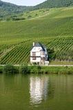 Weinberg- und Ausgangsweinbauer auf Mosel-Fluss Stockfoto