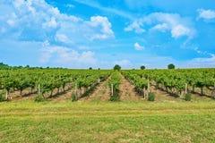 Weinberg und blauer Himmel mit Wolken Lizenzfreie Stockfotografie