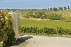 Weinberg und Bottich für Weinproduktion Stockbilder