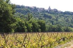 Weinberg und das Dorf Venasque, Frankreich Lizenzfreies Stockbild