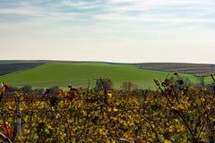 Weinberg und Feld in der Tschechischen Republik - Palava Stockfotografie