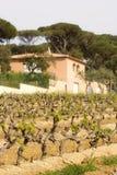 Weinberg und Weinkellerei im Frühjahr Lizenzfreies Stockbild