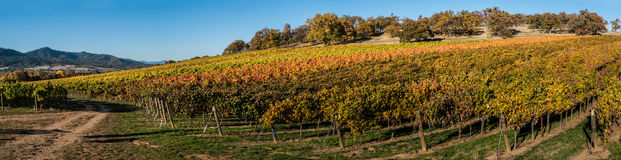 Weinberg und Weinkellerei im ländlichen Gebiet Stockfotografie