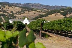 Weinberg und Weinkellerei im Napa Valley Stockfotografie