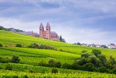 Weinberg von Eibingen-Abtei Stockbild