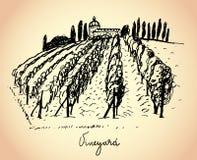 Weinberg. Wein- u. Traubenillustration. Stockbild