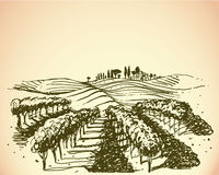Weinberg. Wein- u. Traubenillustration. Stockfotos
