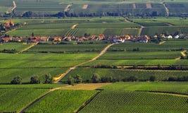 Weinberge Stockbild