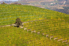 Weinberge auf dem Hügel in Piemont, Italien Lizenzfreie Stockfotografie
