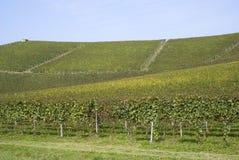 Weinberge auf den Hügeln von Langhe Stockbild