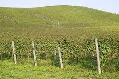 Weinberge auf den Hügeln von Langhe Stockbilder