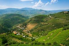 Weinberge auf Hügel Panorama des Duero-Tales Stockfoto