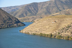 Weinberge bei Douro River Valley, Portugal stockbilder