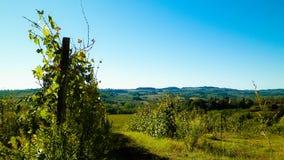 Weinberge in den Hügeln von Toskana lizenzfreie stockbilder