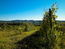 Weinberge in den Hügeln von Toskana stockfotografie