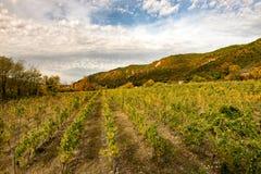 Weinberge in der französischen Landschaft, Drome, Clairette de Die stockbild