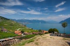 Weinberge der Lavaux-Region, die Schweiz Lizenzfreies Stockfoto