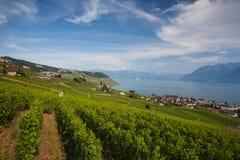 Weinberge der Lavaux-Region, die Schweiz Stockfotos