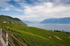 Weinberge der Lavaux-Region, die Schweiz Lizenzfreie Stockfotos