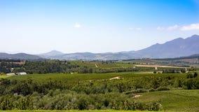 Weinberge in der schönen südafrikanischen Landschaft Lizenzfreie Stockfotografie