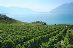 Weinberge in der Schweiz Stockfotos