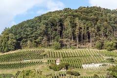 Weinberge in der Schweiz auf einem Berg Lizenzfreies Stockfoto