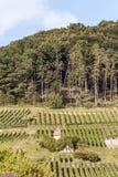 Weinberge in der Schweiz auf einem Berg Stockbild