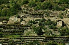 Weinberge des Aosta Tales, Italien Stockbild