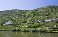 Weinberge des Douro Tales lizenzfreies stockbild