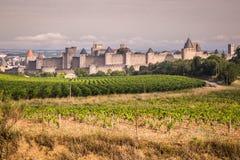 Weinberge, die außerhalb der mittelalterlichen Festung von Carcassonne I wachsen stockfotografie