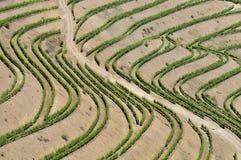 Weinberge, douro Portugal lizenzfreie stockfotografie