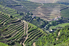 Weinberge, douro Portugal lizenzfreie stockbilder