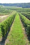 Weinberge in Frankreich lizenzfreies stockbild