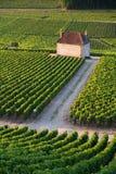 Weinberge in Gevrey chambertin Burgunder Frankreich lizenzfreie stockfotos
