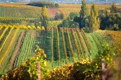Weinberge am Herbst, Pfalz, Deutschland Stockfotos