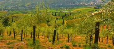 Weinberge im Duero River Valley zwischen Peso de Regua und Pinhao, Portugal lizenzfreies stockbild
