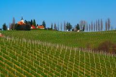 Weinberge im Frühjahr, Slowenien Stockbilder
