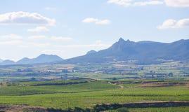 Weinberge im Haro, Rioja, Spanien stockbild