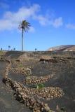 Weinberge im La Geria, Lanzarote, Kanarische Inseln, Spanien Stockfoto
