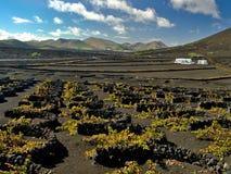 Weinberge im La Geria, Lanzarote, Spanien Lizenzfreie Stockfotos