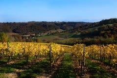 Weinberge im Südwesten Frankreich lizenzfreies stockbild