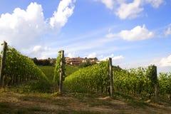 Weinberge in Italien Lizenzfreies Stockfoto