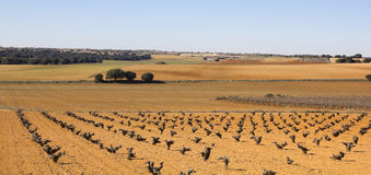 Weinberge in Kastilien stockfoto