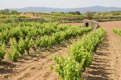 Weinberge in Katalonien stockbilder