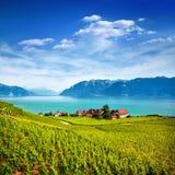 Weinberge in Lavaux-Bereich, die Schweiz Lizenzfreies Stockbild