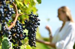 Weinberge in Lavaux, die Schweiz Lizenzfreies Stockbild