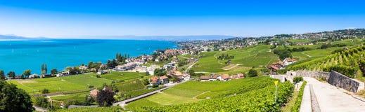 Weinberge in Lavaux-Region - Terrassen Terrasses de Lavaux, Switz Lizenzfreies Stockbild