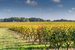 Weinberge in Medoc-Region nahe Bordeaux in Frankreich mit Hügel gra lizenzfreie stockbilder