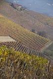 Weinberge nähern sich Barolo, Piemonte Italien Lizenzfreies Stockfoto